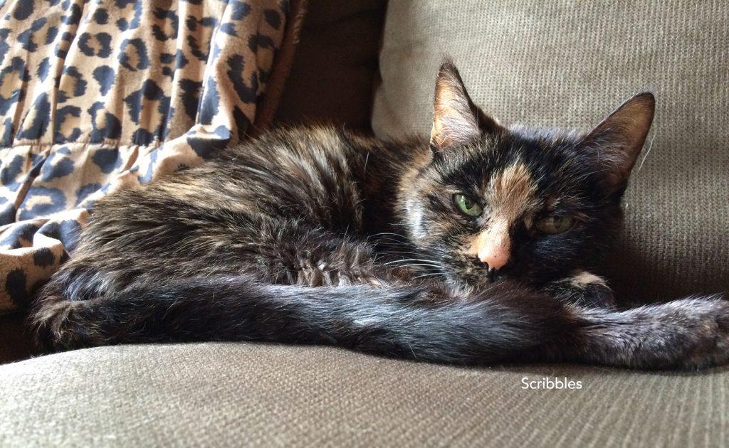 Scribbles cat
